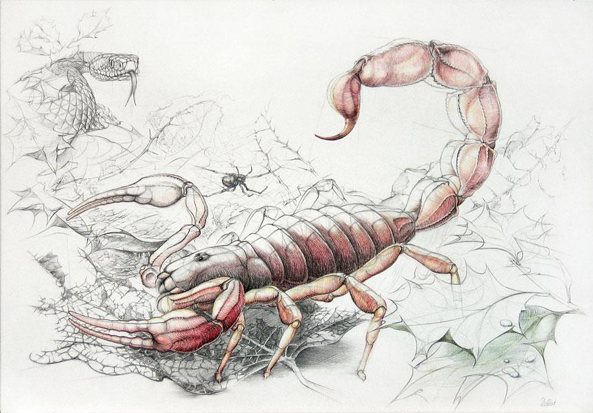 sternzeichen skorpion. Black Bedroom Furniture Sets. Home Design Ideas